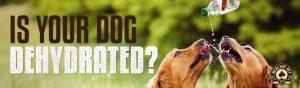 Dog-Dehydration